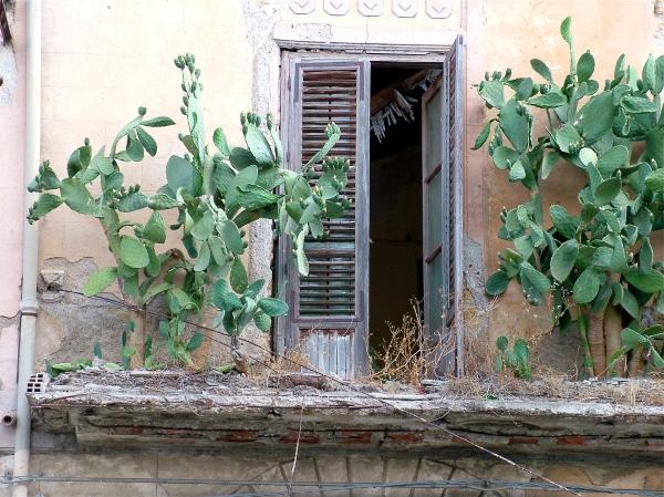 fico d'India sul balcone di costagar51