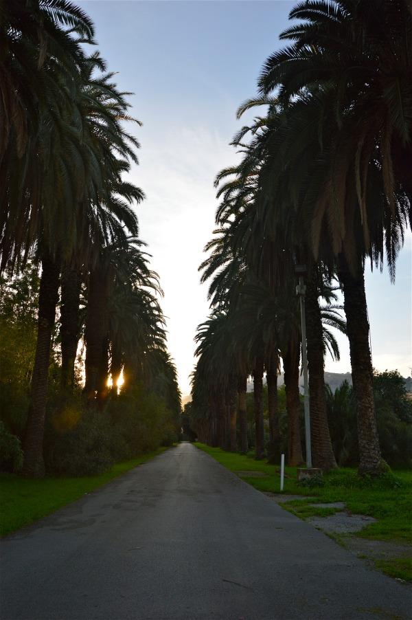 Villa Tasca: il viale di palme di costagar51