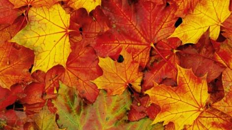 colori_foglie_autunno