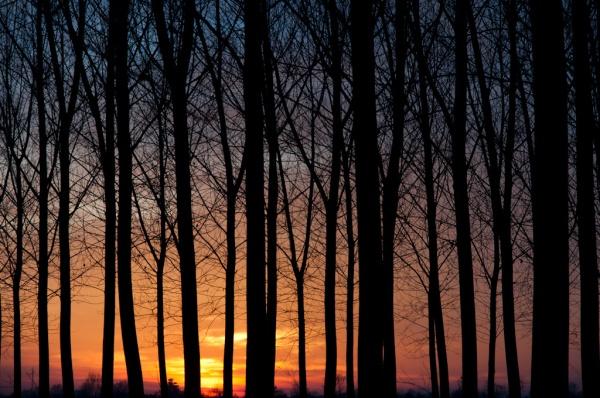 pioppi-tramonto